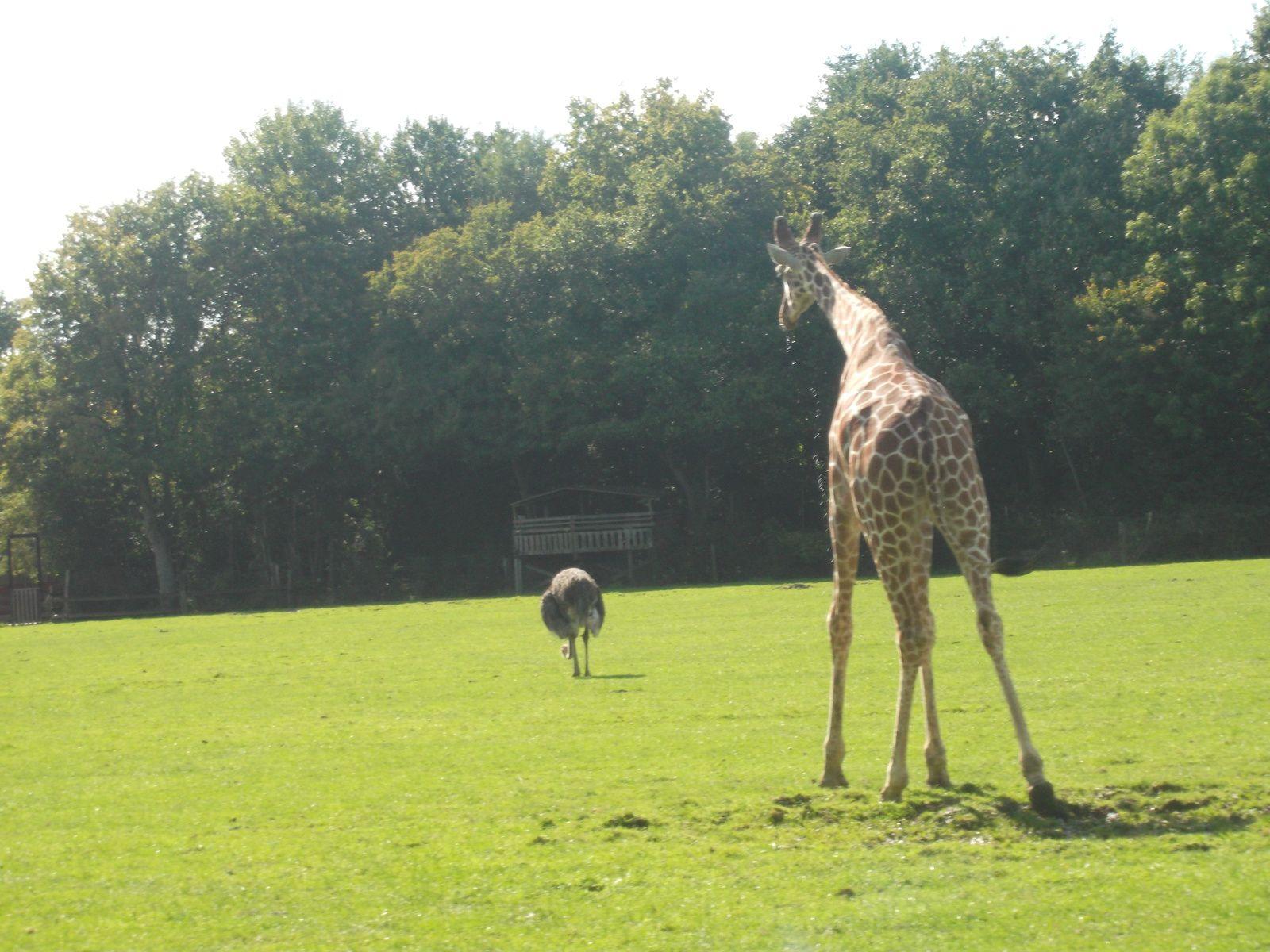 sortie au zoo de Cerza (4)
