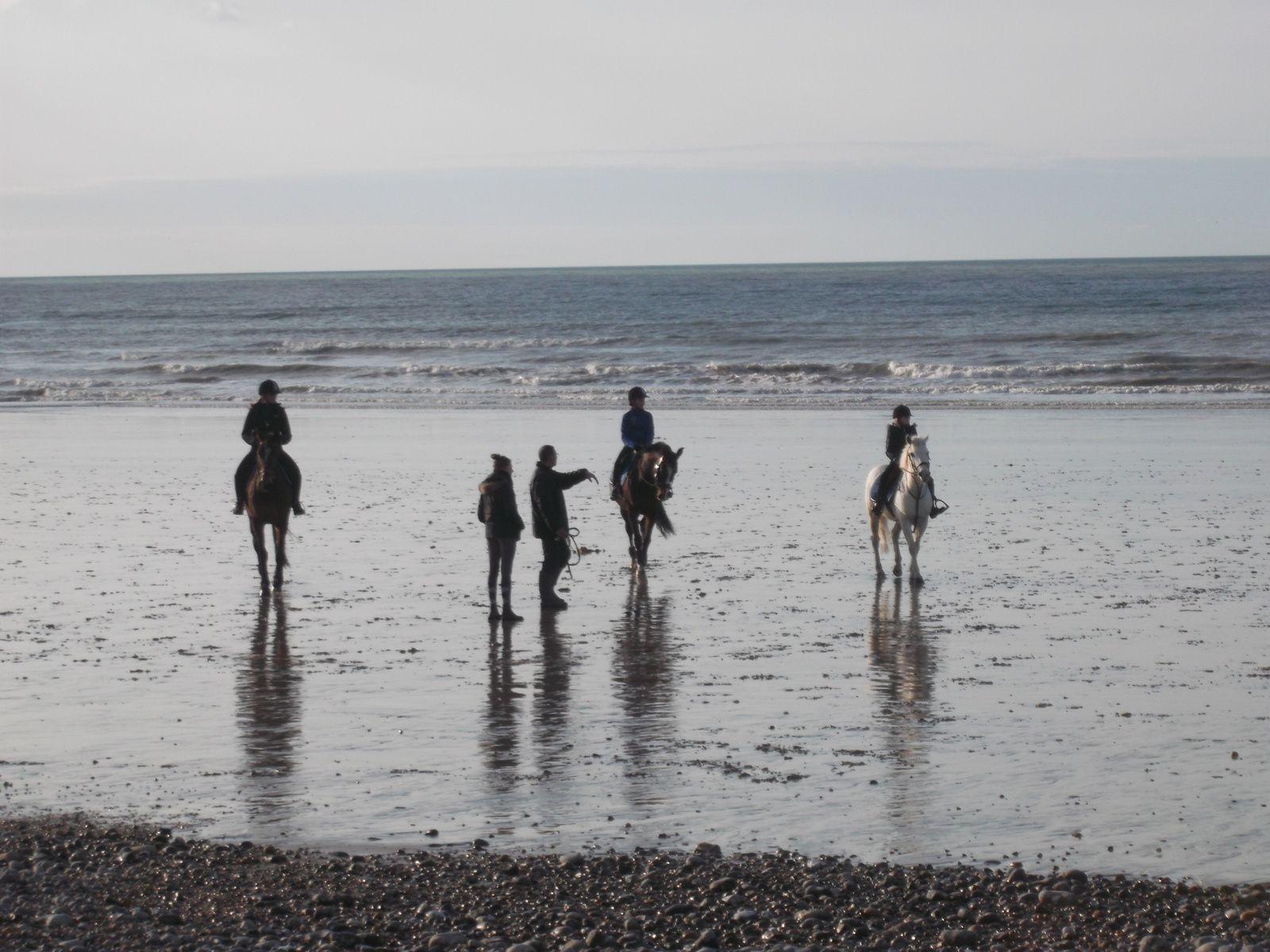 une balade sur la plage de Mers-les-Bains (80) et le joli spectacle des chevaux ...