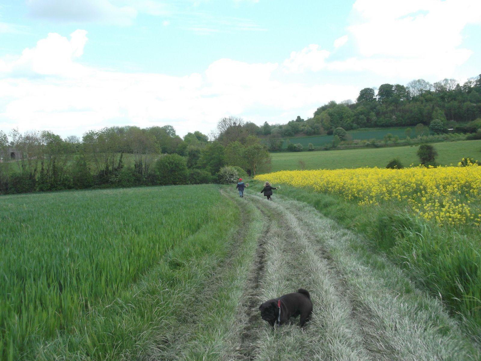 balade en Pays de Bray chez ma grande soeur ..