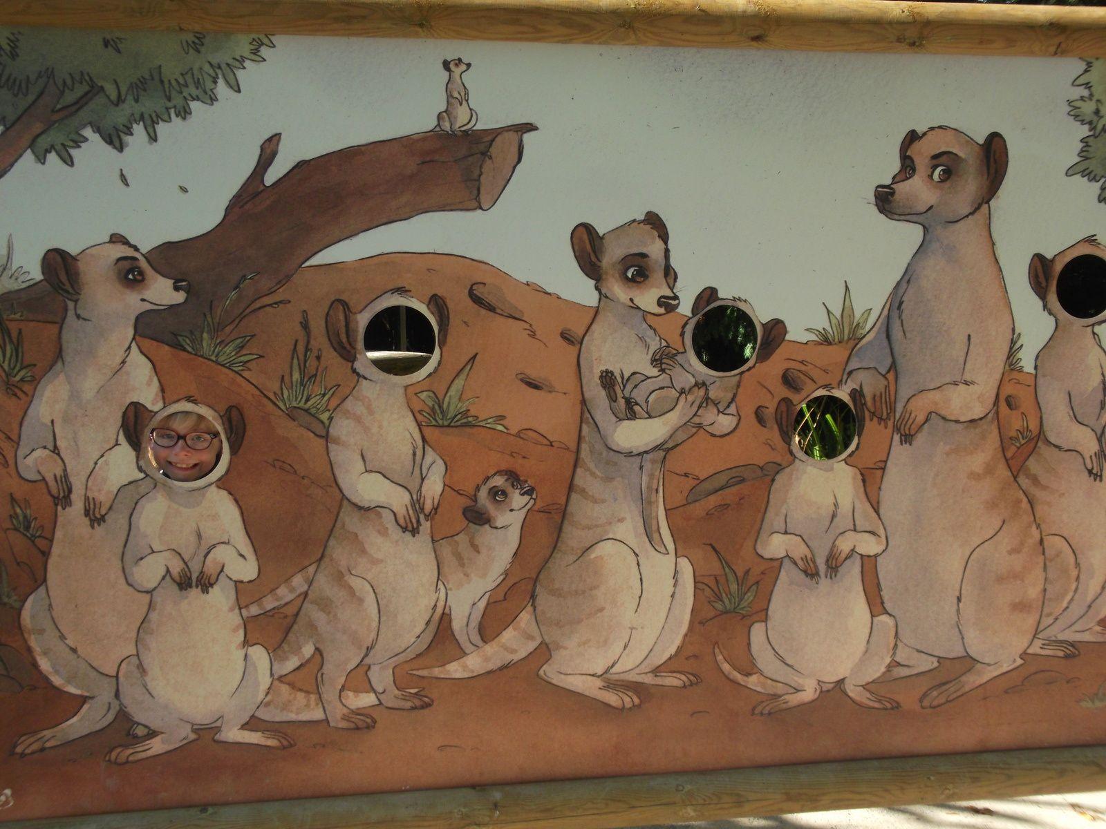 Retour en Septembre au zoo d'Amiens... nos préférés ? les suricates et les manchos !!! (1)