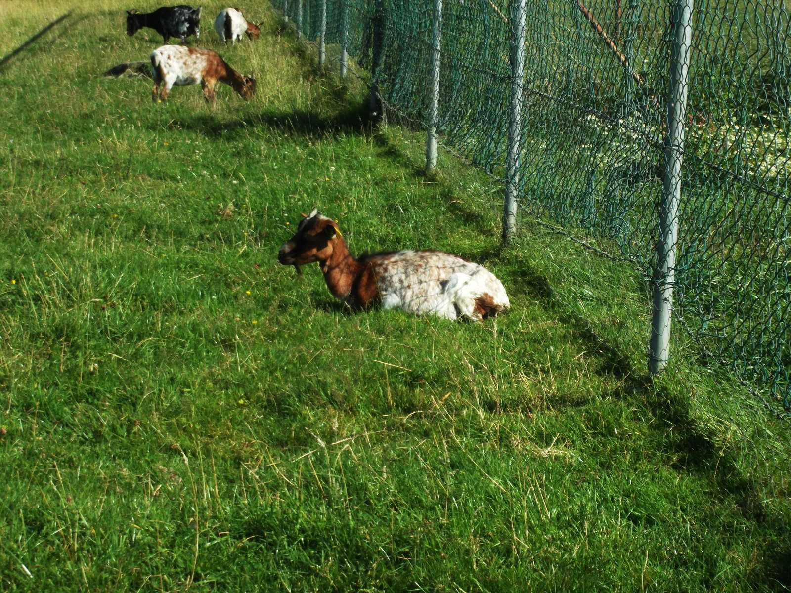 On se réchauffe avec une ballade à la ferme de Beaumont (76) au mois d'Août