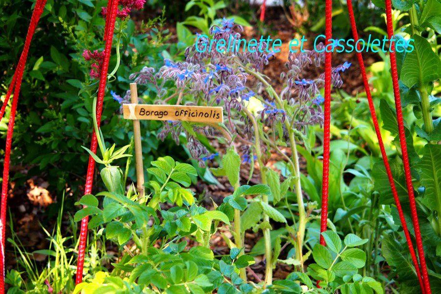 L'Observatoire des Tendances du Jardin à Courson : « Transmission »