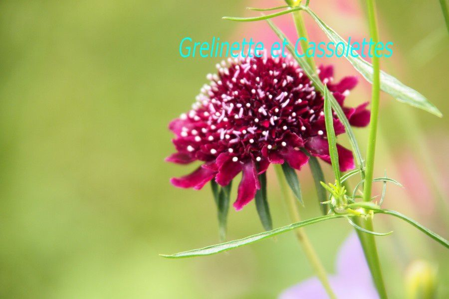 Tour au jardin : connaissez vous ces plantes ?