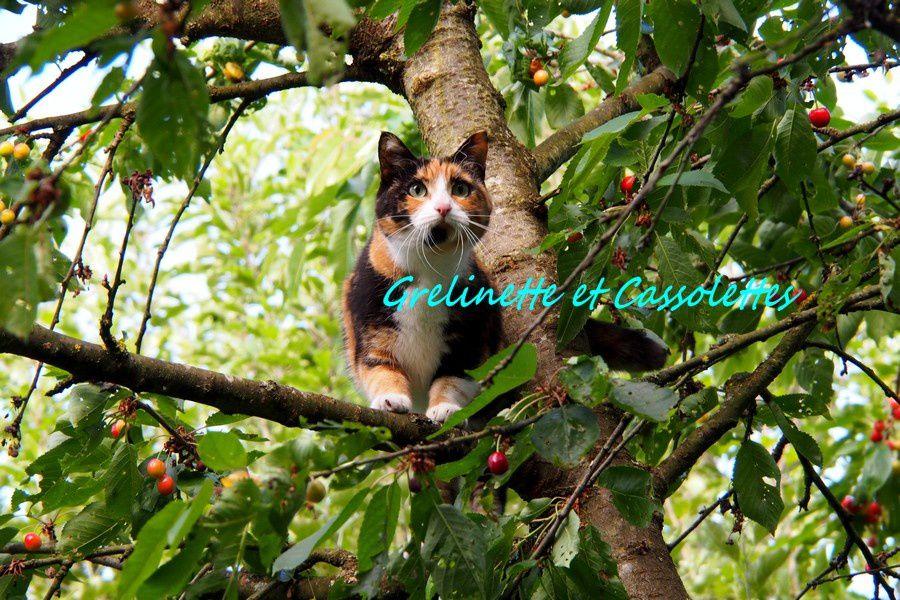 Hortense fait du Cerisier