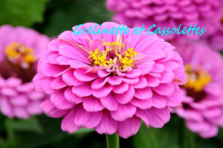 F te des plantes d 39 automne saint jean de beauregard grelinette et cassolettes - Fete des plantes saint jean de beauregard ...