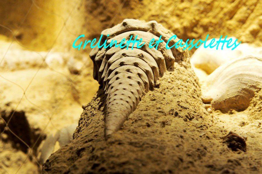 Voyage au centre de la Terre… La Cave aux coquillages