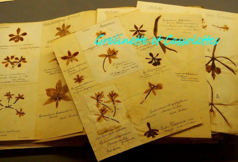 Délices au Jardin La Bibliothèque de la Société d'Horticulture expose à Chantilly