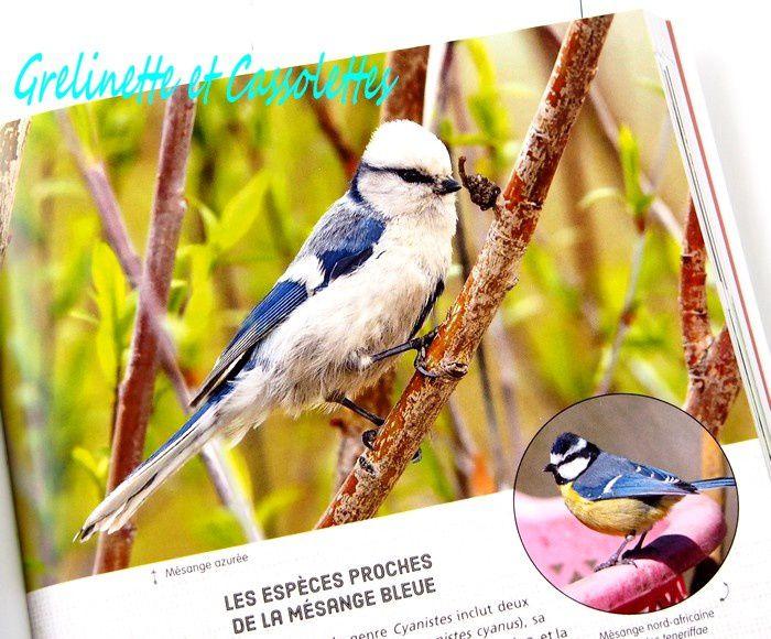 Le Petit Larousse des Oiseaux de France &amp&#x3B; d'Europe