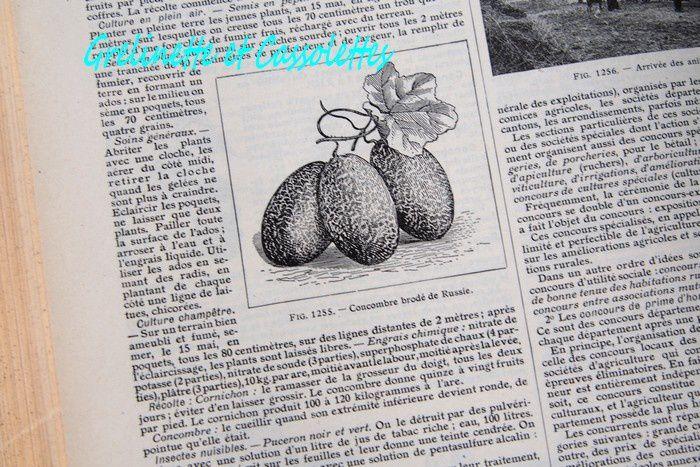 Une collection de Dictionnaires Larousse Anciens