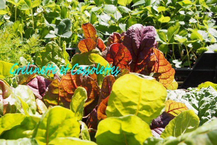 Plantes parfums chez Hortiflor Bureau Grelinette et Cassolettes