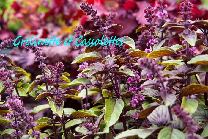 Prparer lAutomne au Jardin avec Hortiflor Bureau Grelinette et