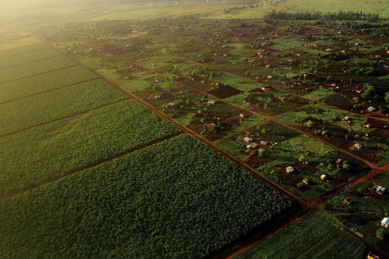 Les sols fertiles d'Afrique peuvent-ils nourrir la planète ? - National Geographic