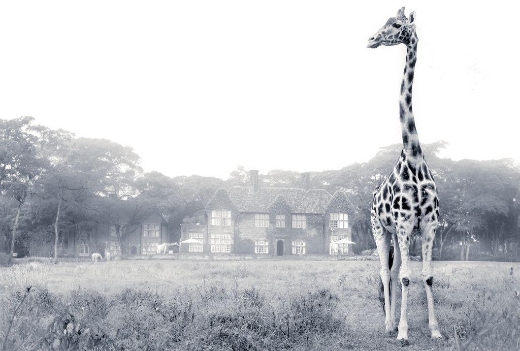 Tamini Giraffe Manor, Nairobi, Kenya, Hôtel insolite, les giraffes