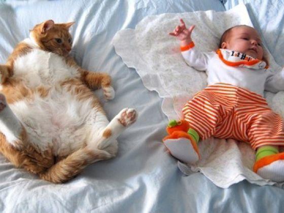 Le Top des photos de Chats dans de drôles de positions