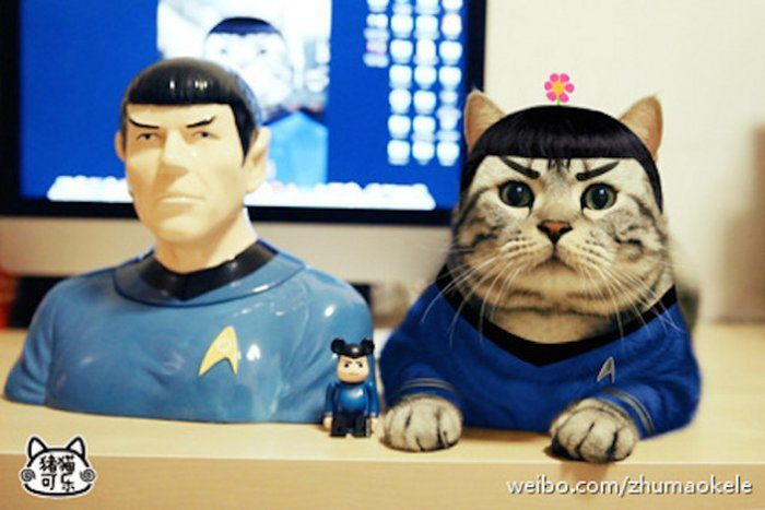 Le chat Zhumao Kele, Cosplay de chat, Chine