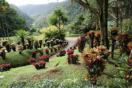 Le Jardin de Balata, Jean-Philippe Thoze, Fort de France, Martinique