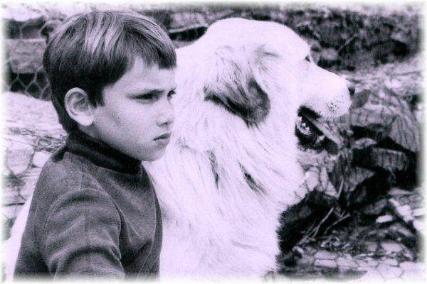 Belle, la chienne de Belle et Sébastien, série TV