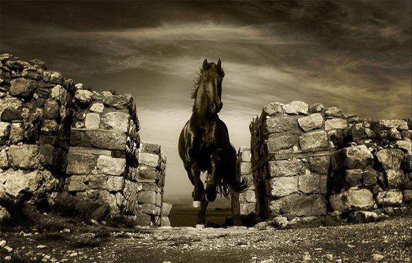 Tornado, le cheval de Zorro, série TV