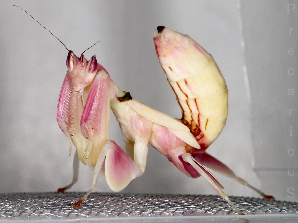 source : http://mantis-suport.livejournal.com/20890.html