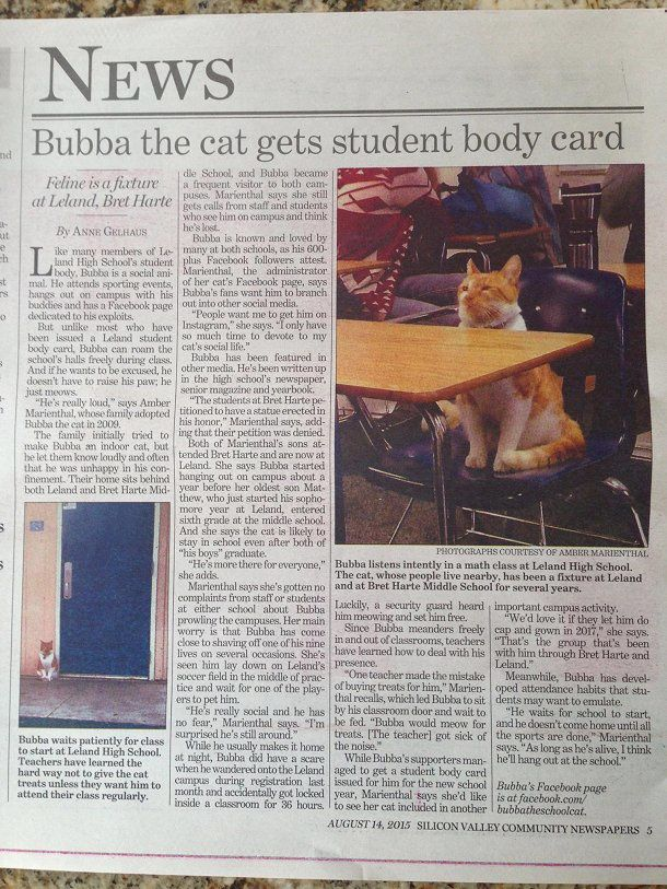 Bubba, le chat qui a sa carte d'étudiant, Amérique
