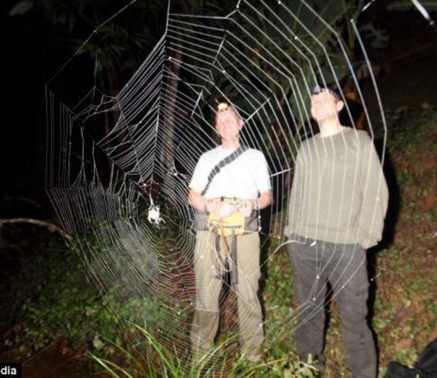 L'araignée Darwin,  Caerostris Darwini, la plus exceptionnelle au monde, Madagascar