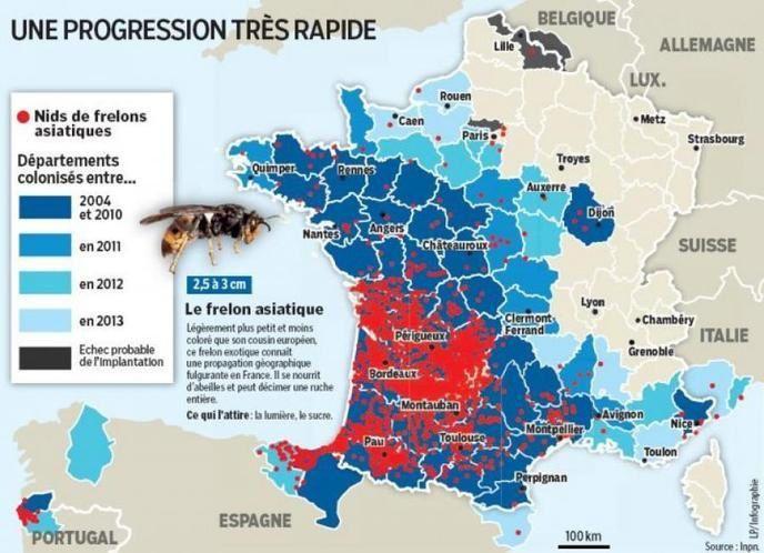 Le Frelon Géant Asiatique, dangereux, France