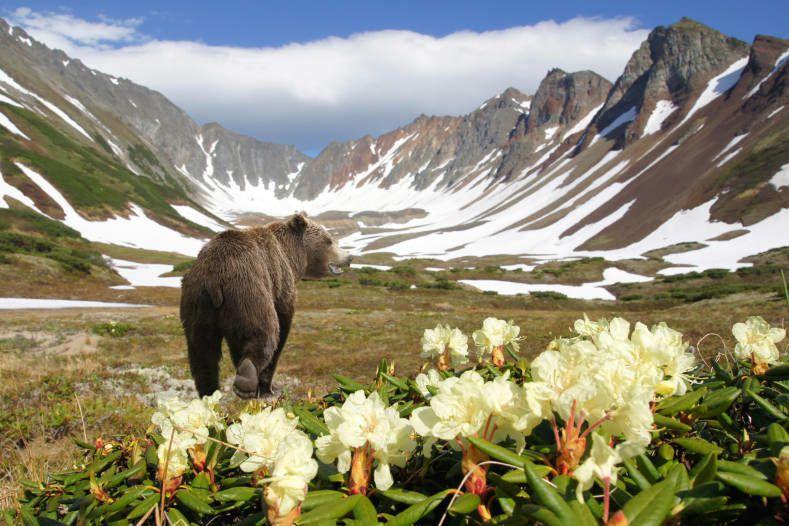 Kamtchatka, l'Extrême Orient Russe, et ses 300 volcans, Russie