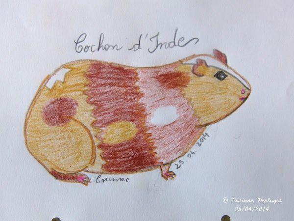 mon cochon d'Inde, crayons de couleur et Crayola®