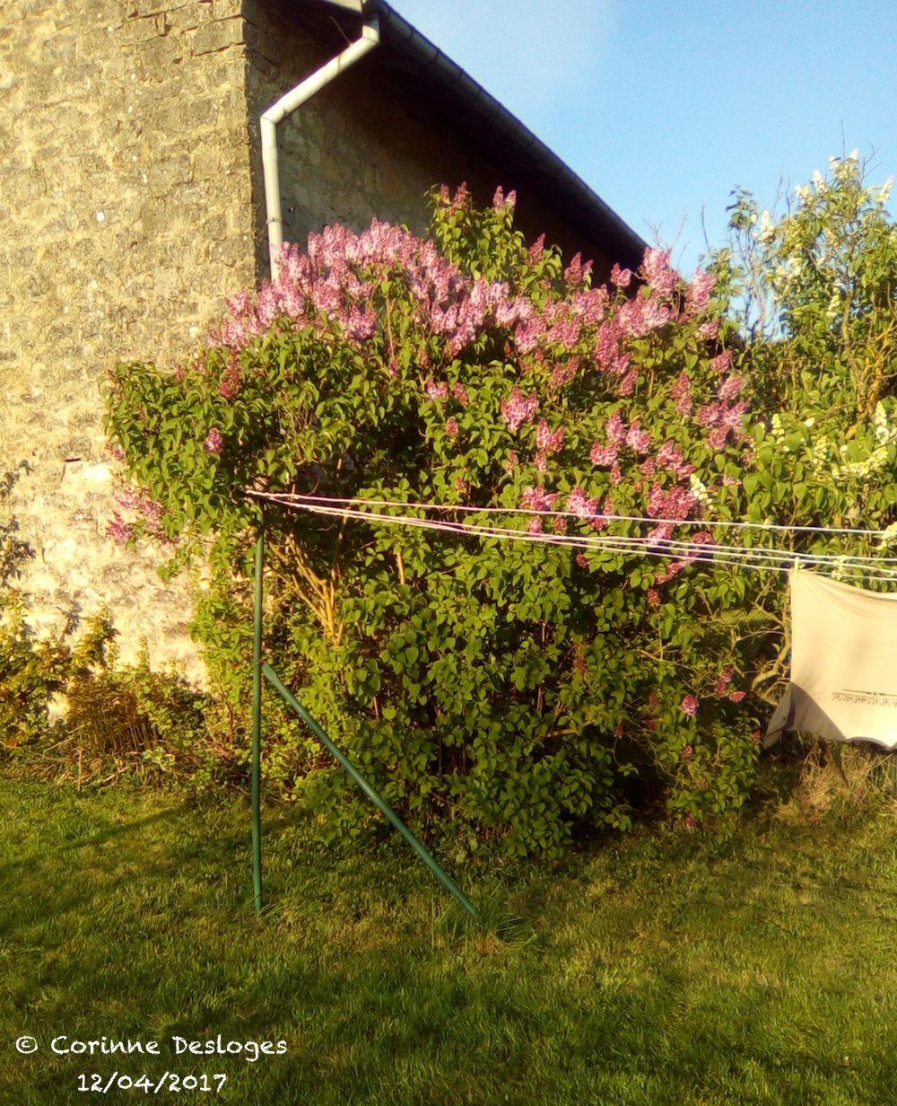 Du jardinage creativ idees le blog de casse bonbeca for Jardin 93