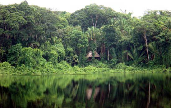 Petit feuilleton de l'été  N°2,j'aime la jungle