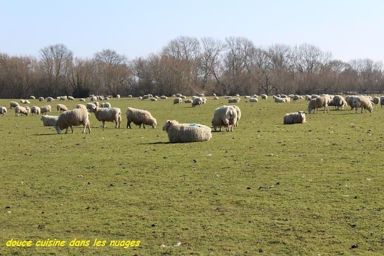 Les moutons du Kent et sauté d'agneau, wakamé et chou chinois