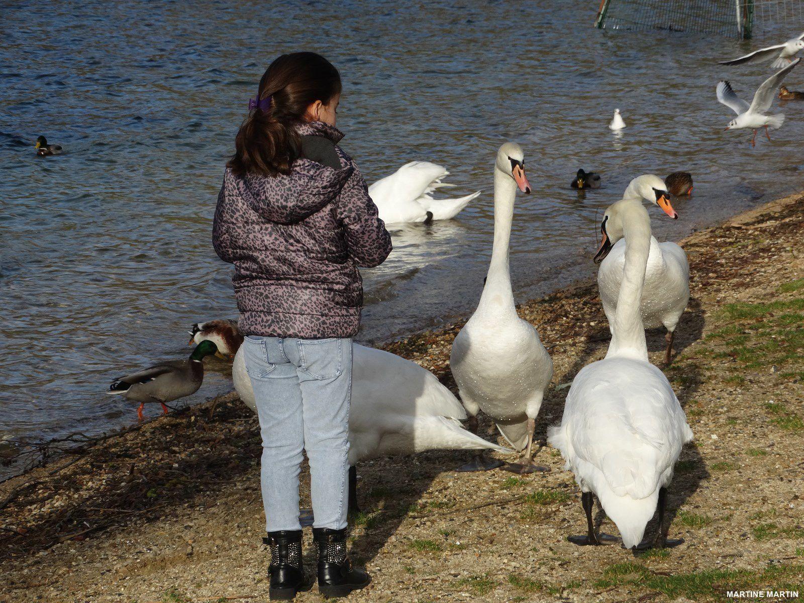 Faites moi un cygne aux étangs de Cergy