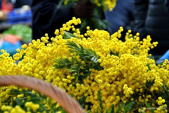 Photos fête des grands mères sur marché de Cergy