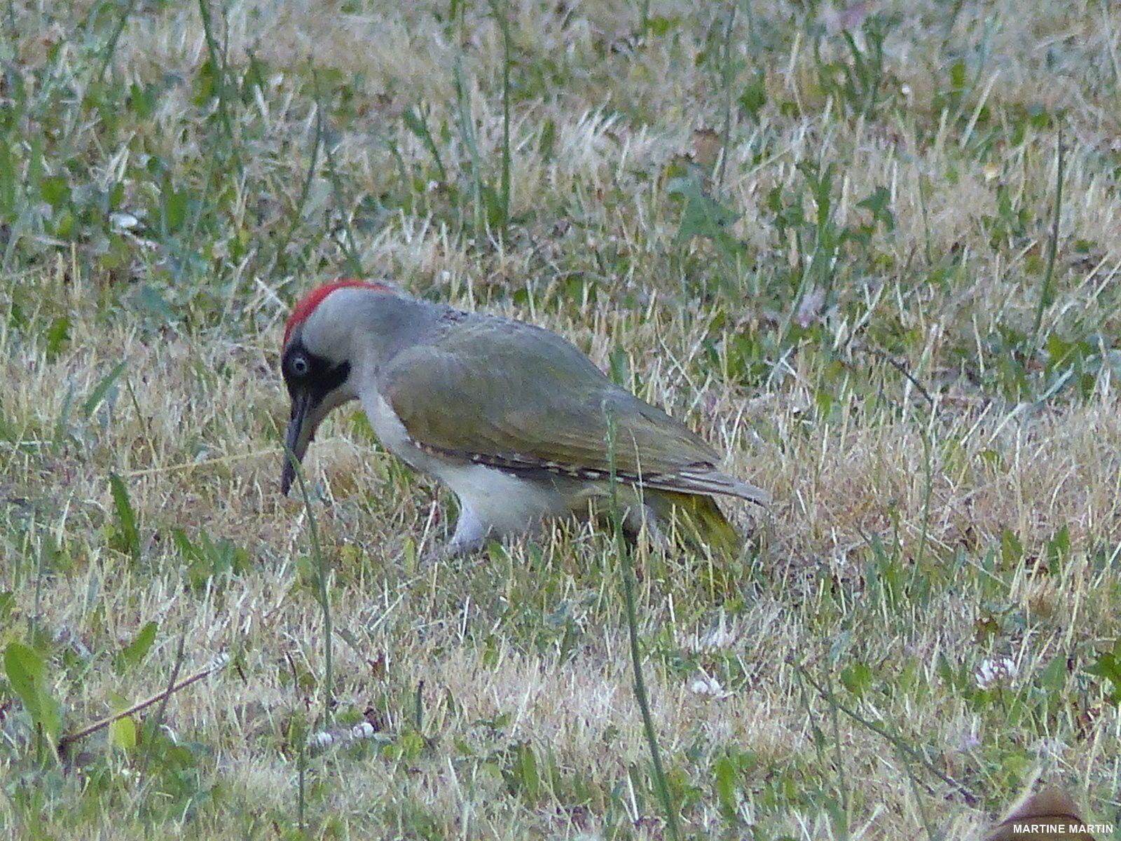 Oiseaux dans un jardin Cergyssois