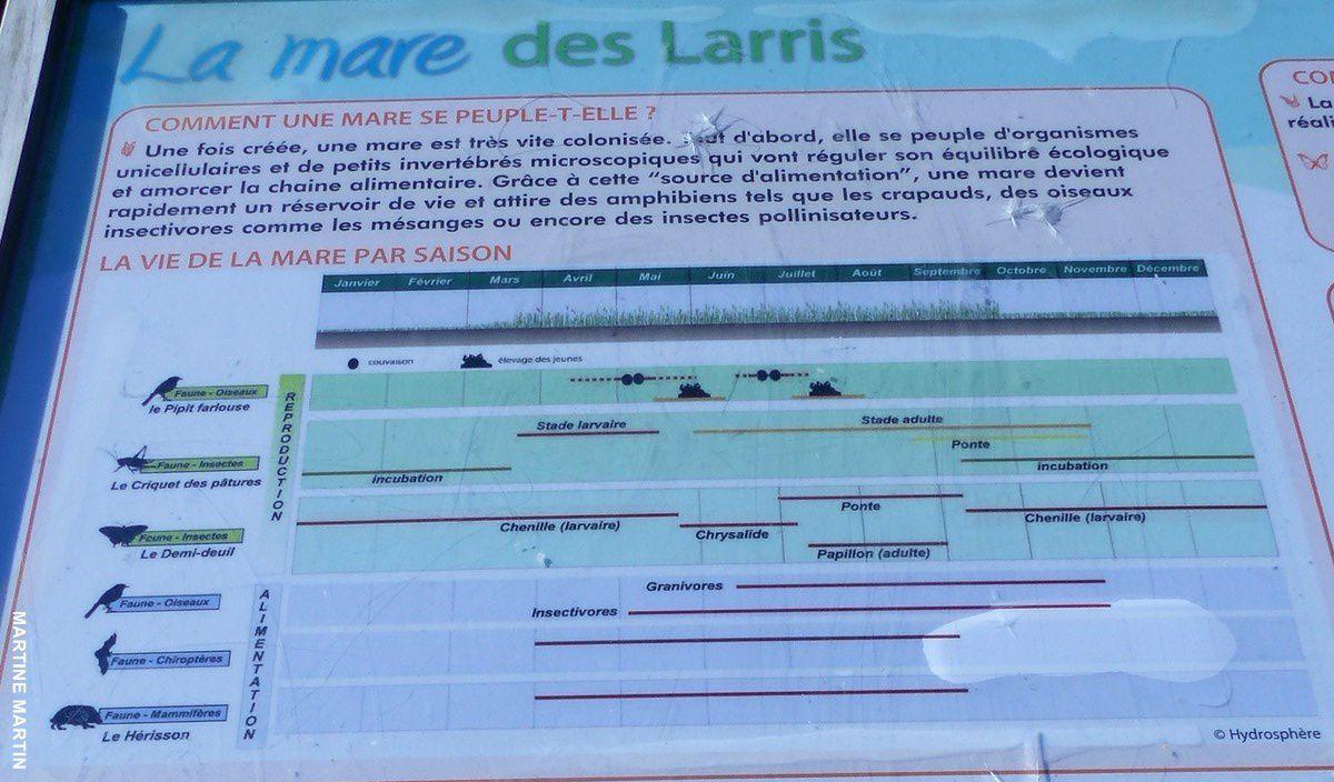 Le Parc et la mare des Larris à Pontoise