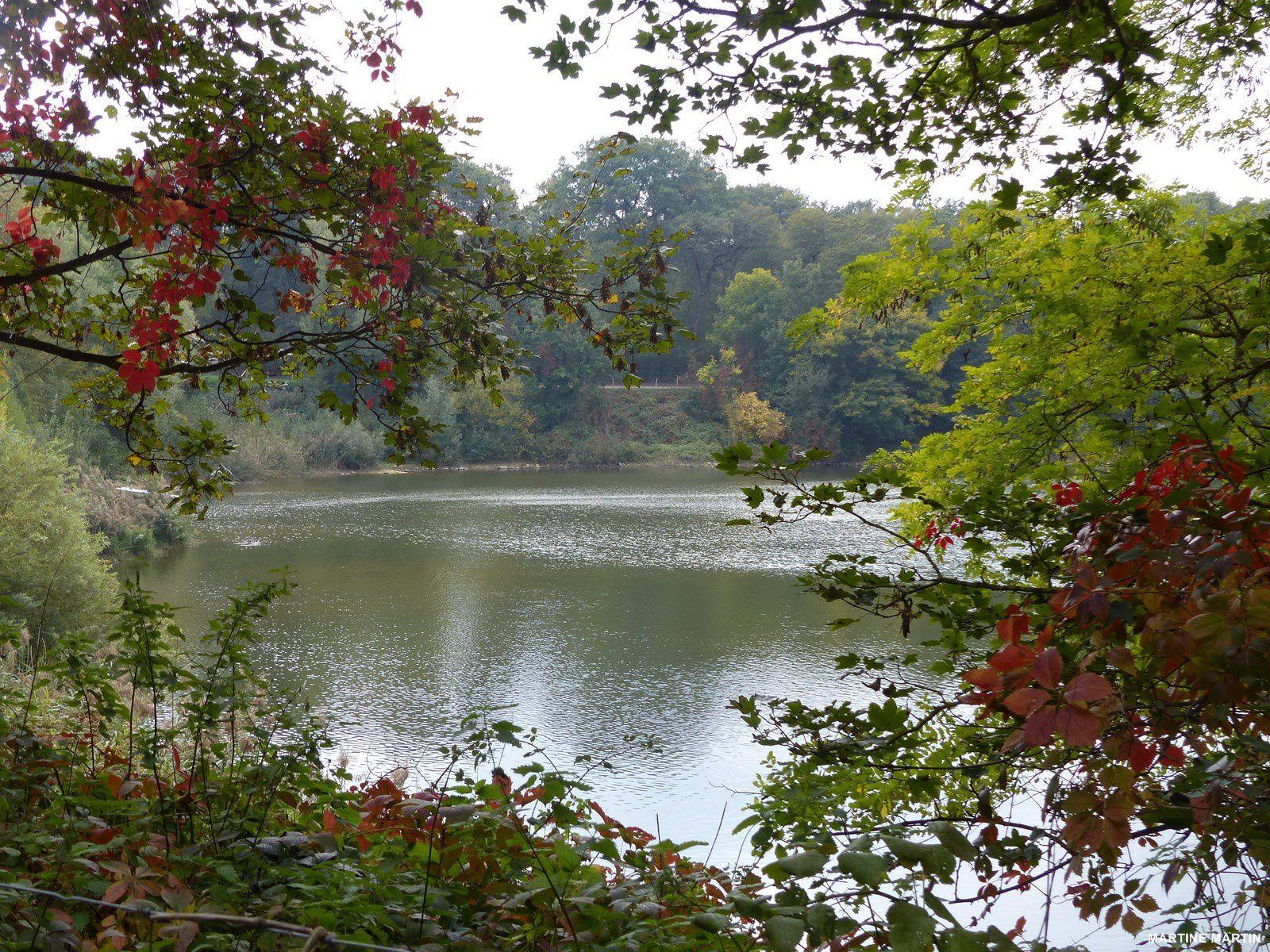 L'étang du Corra en forêt de Saint Germain