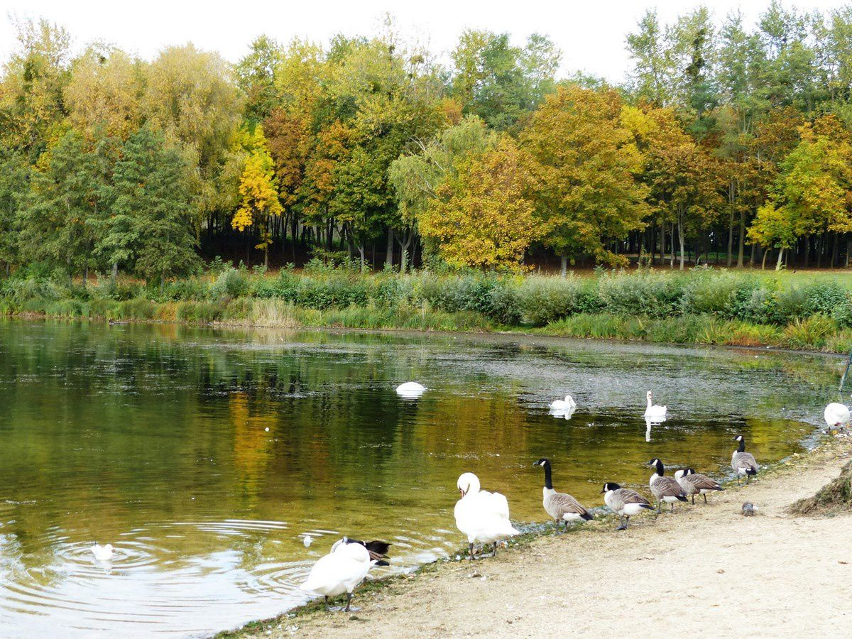 A la queue leu leu aux Etangs de Cergy