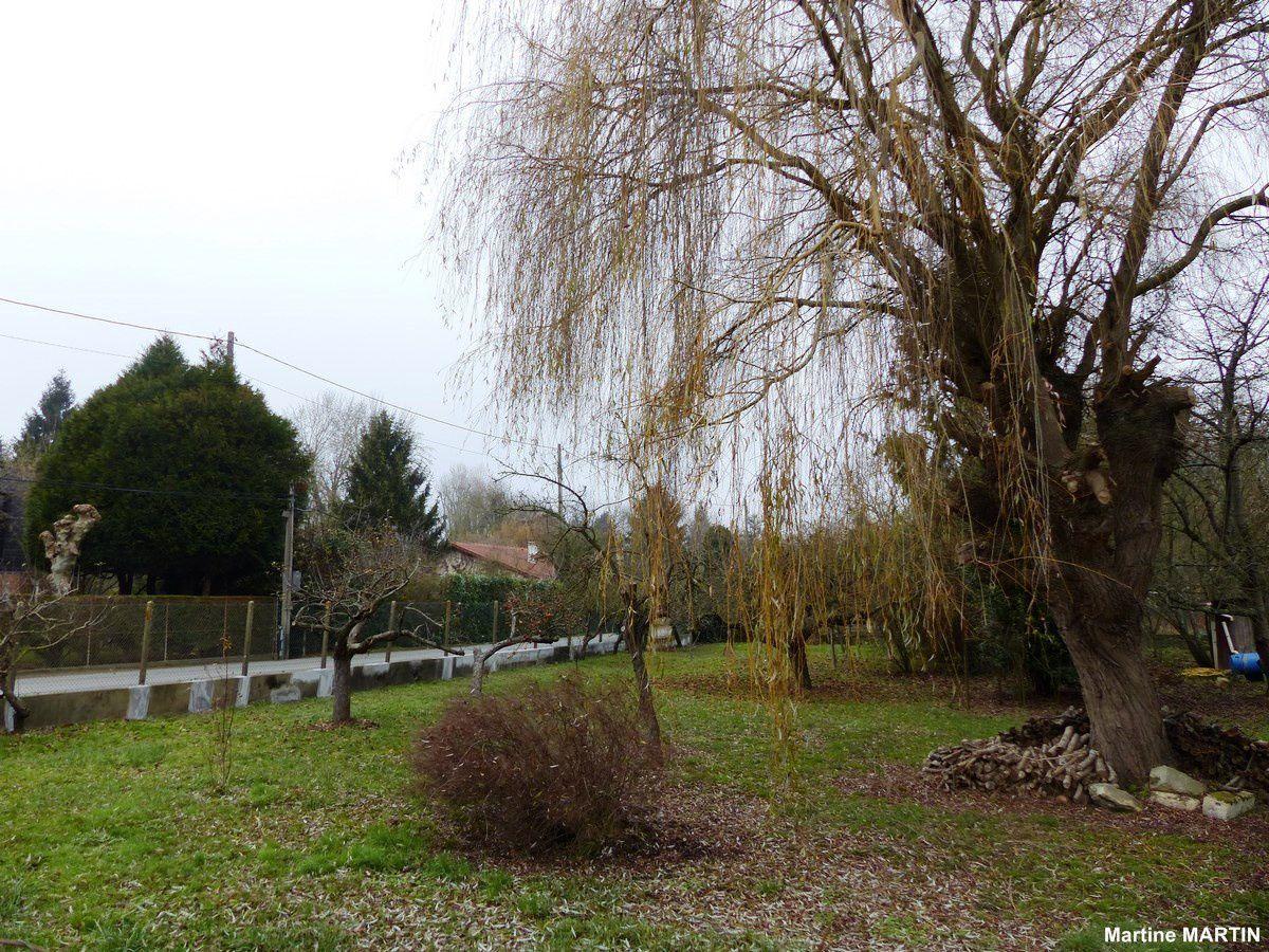 Saule et pommier à Cergy Village