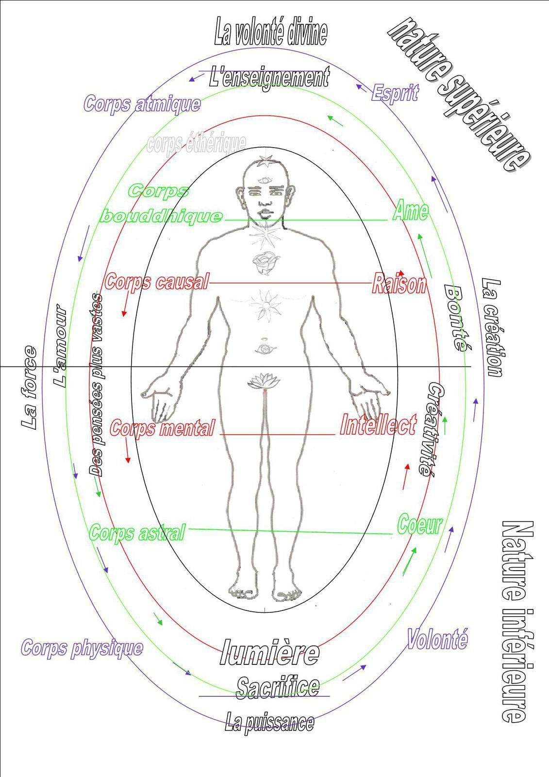 Symbolique du corps : côtés droit, gauche, douleurs...