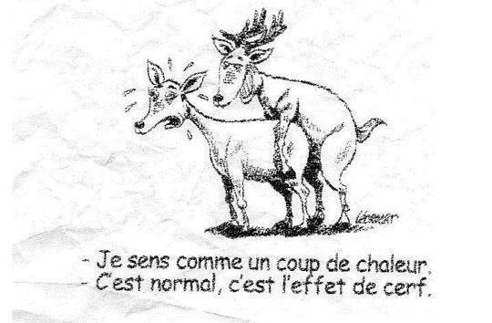 HUMOUR DOMINICAL / DESSINS