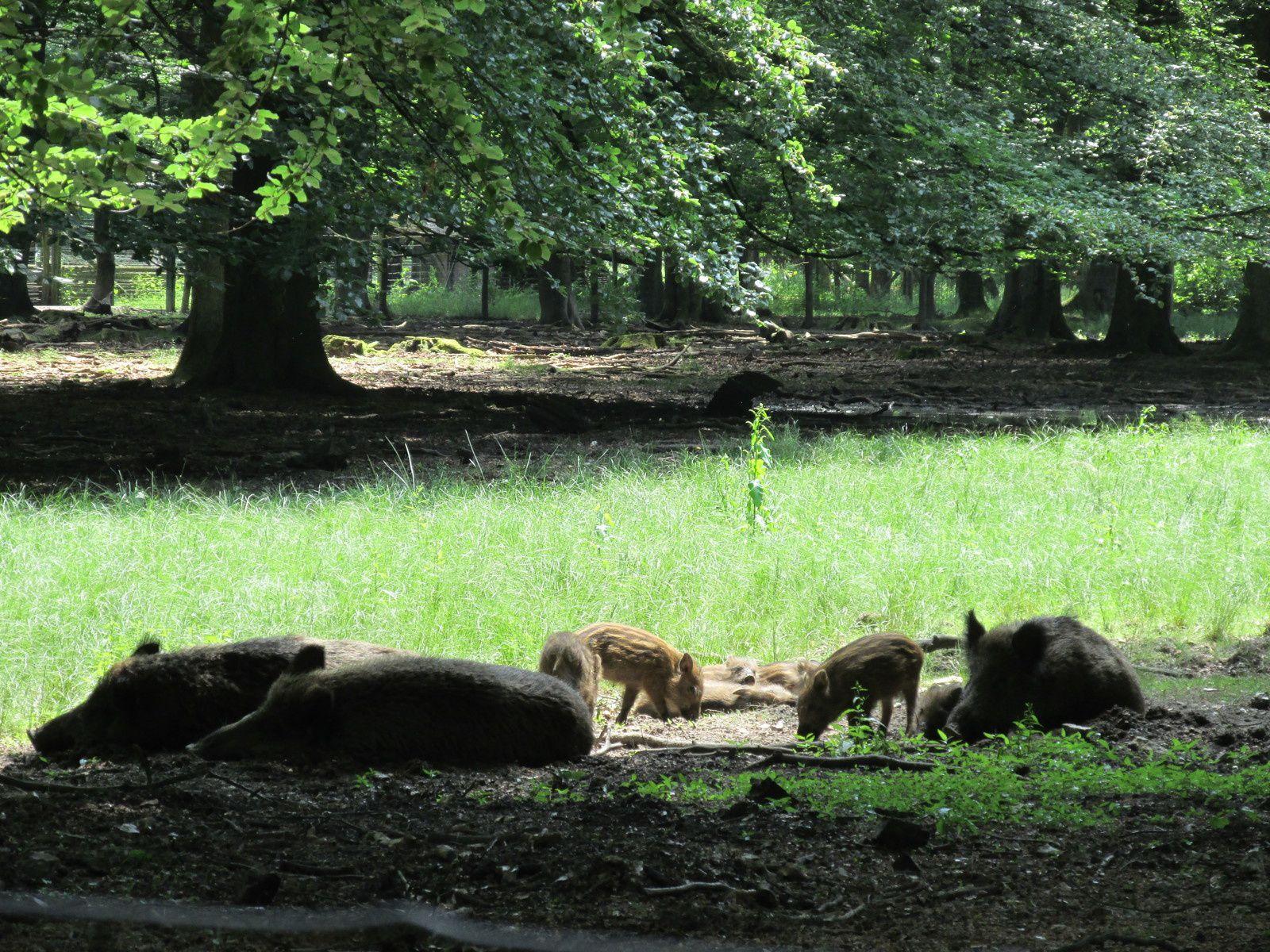 Le parc animalier de Roumare / TOURISME / NORMANDIE
