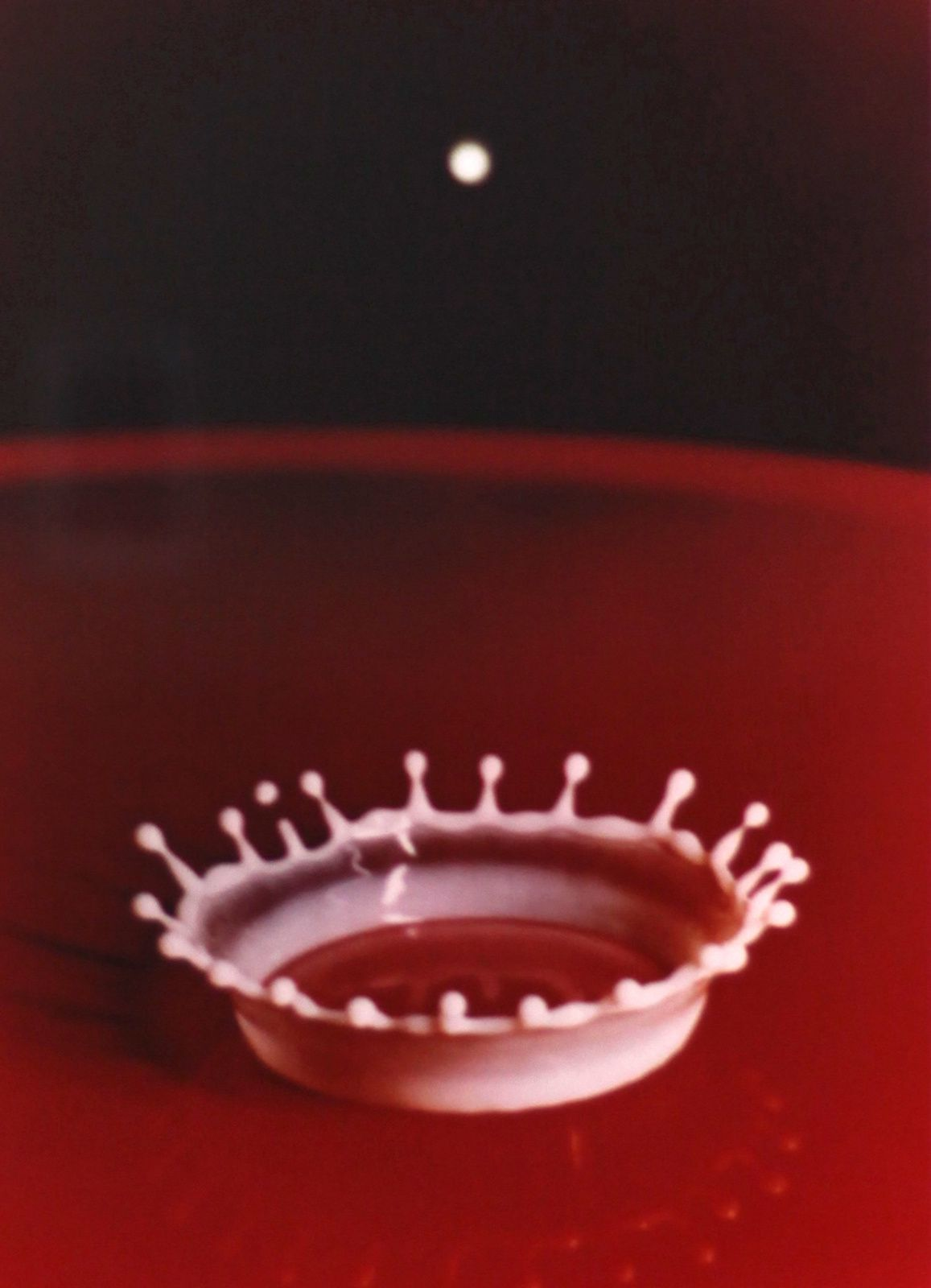 """Milk drop coronet"", 1957 de Harold E. Edgerton © Photo Éric Simon"