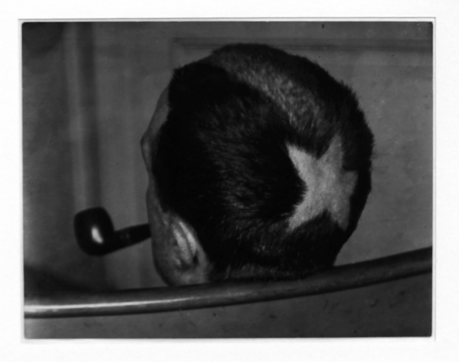 """Marcel Duchamp, la tonsure"", 1920 de Man Ray © Photo Éric Simon"
