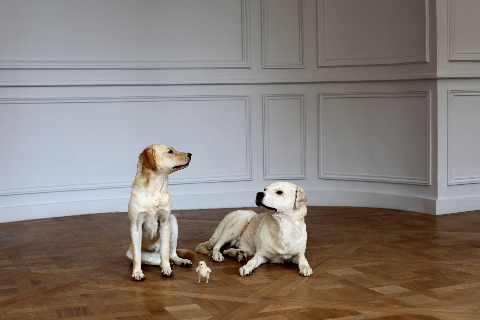 """""""Sans titre"""", 2001 de Maurizio CATTELAN - Courtesy Collection Privée © Photo Éric Simon"""
