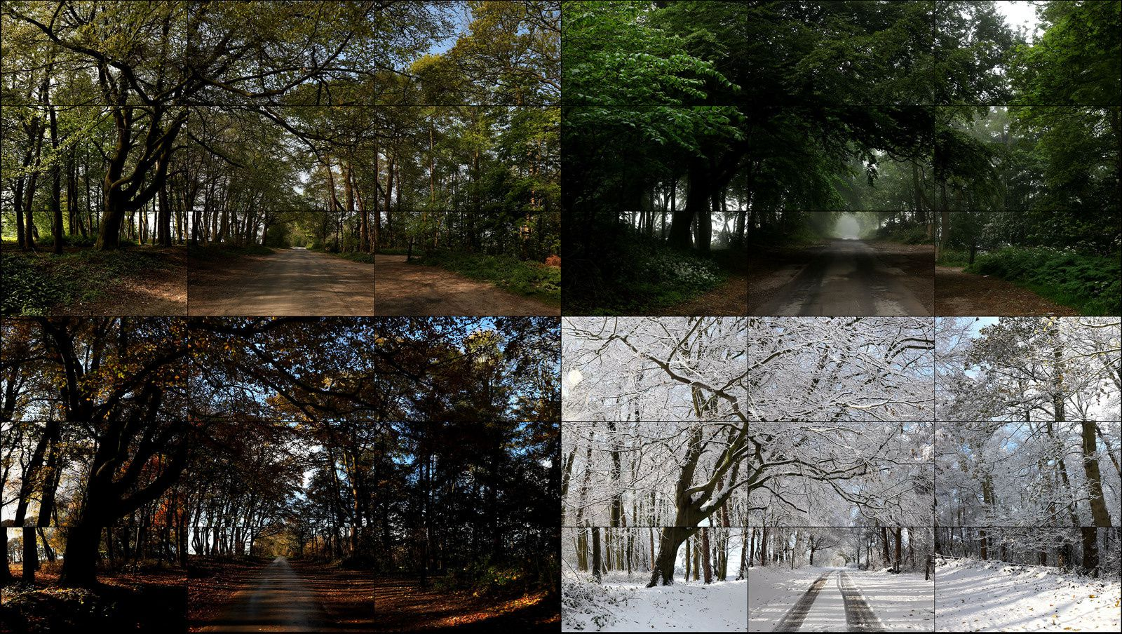 """The Fours Seasons, Woldgate Woods"", 2010 - 2011 de David HOCKNEY"