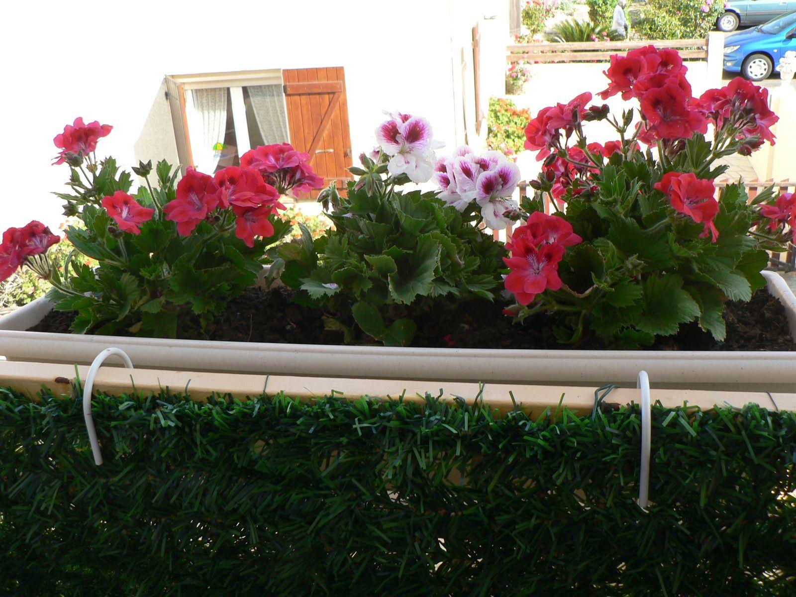 CHEZ MILDEFIS-fenêtres fleuries