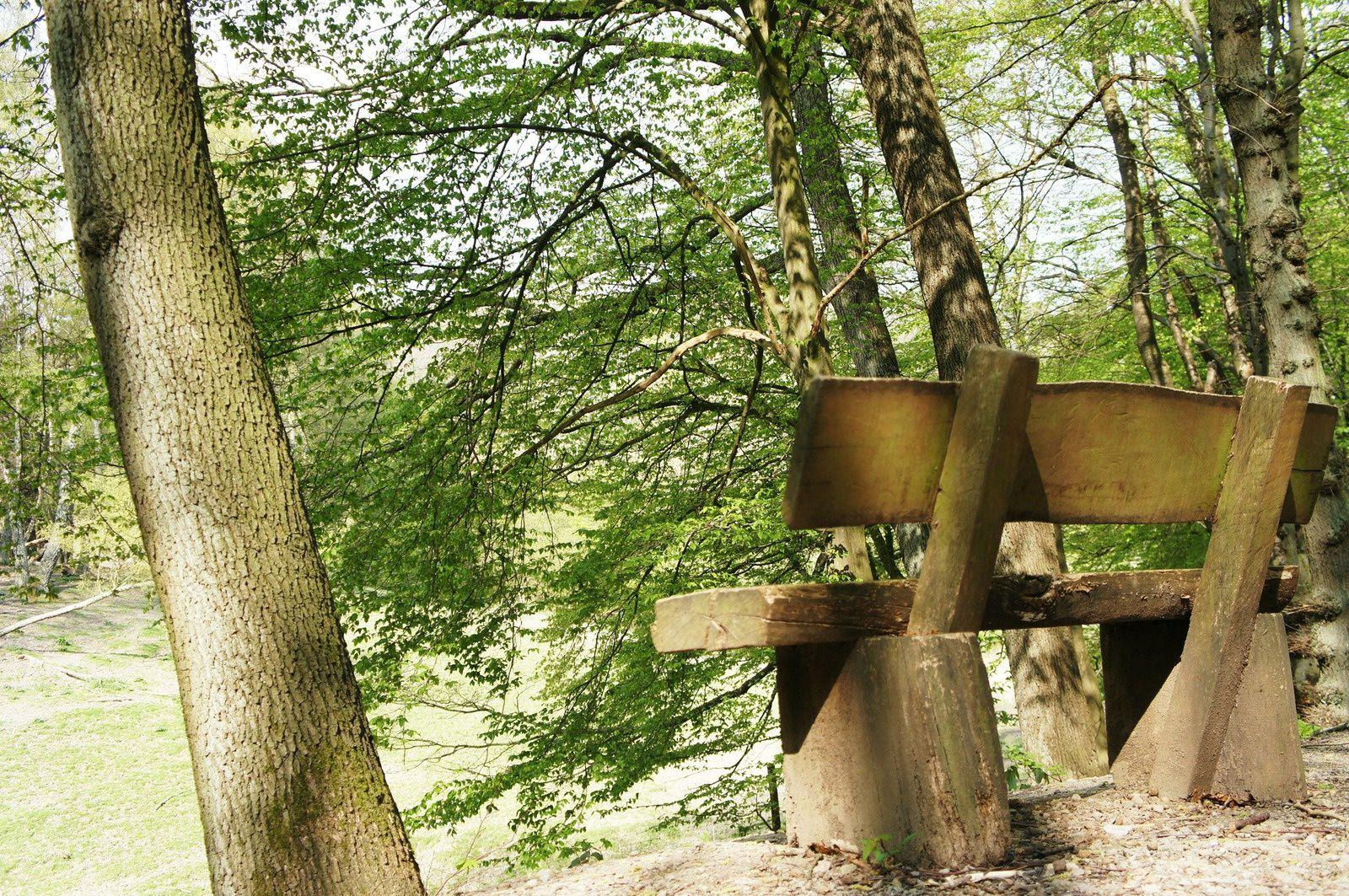 Une escapade en Rhénanie-du-Nord-Westphalie, entre le parc national de l'Eifel et ses marcassins et le lac Ruhrsee et sa marina. Les jeux d'éveil en allemand sur la tablette de papa n'ont, pour une fois, fait l'objet d'aucune question...