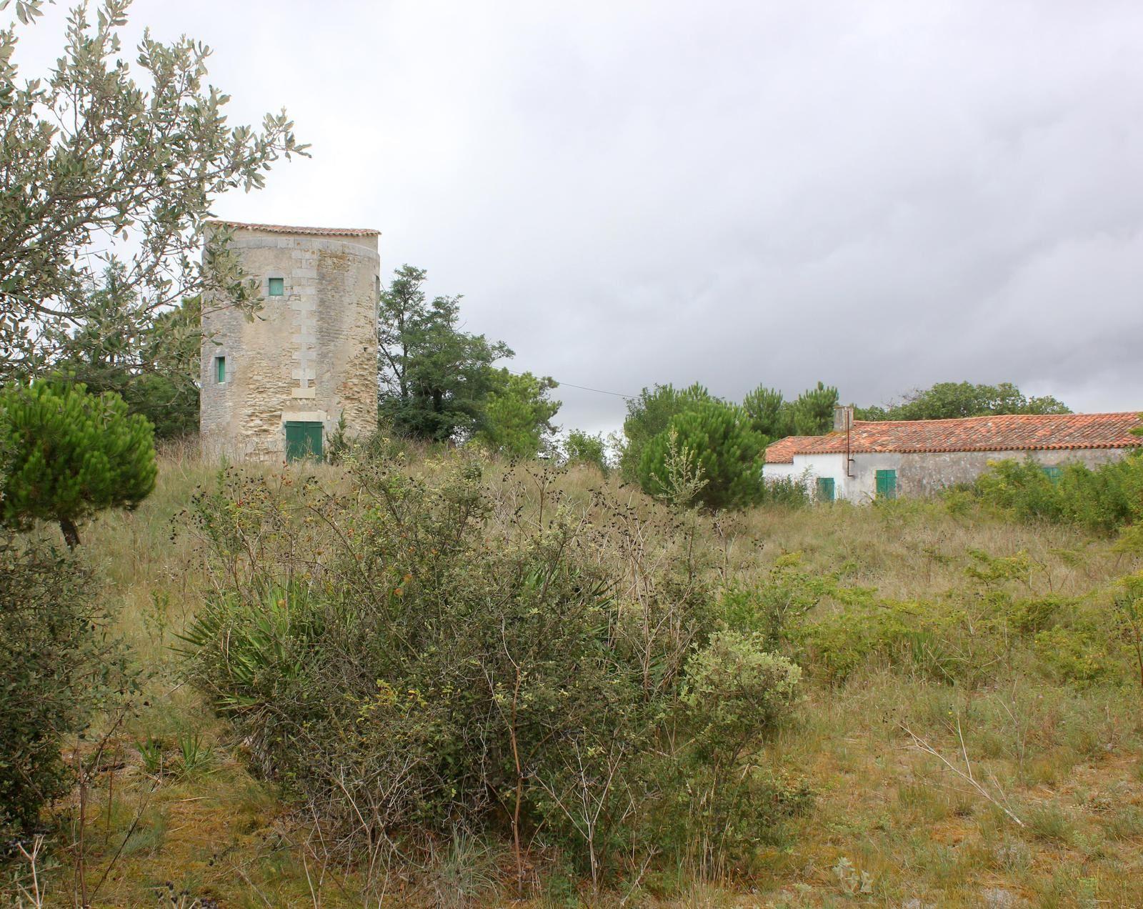 Le Moulin de la Côte (propriété d'Aimé Graffigne) au Château d'Oléron)