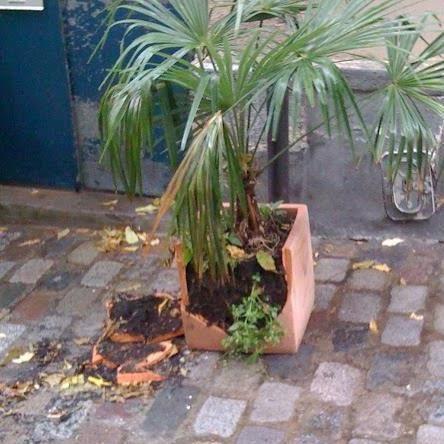 Cité du Midi. Pigalle. Pittoresque et nature à préserver!