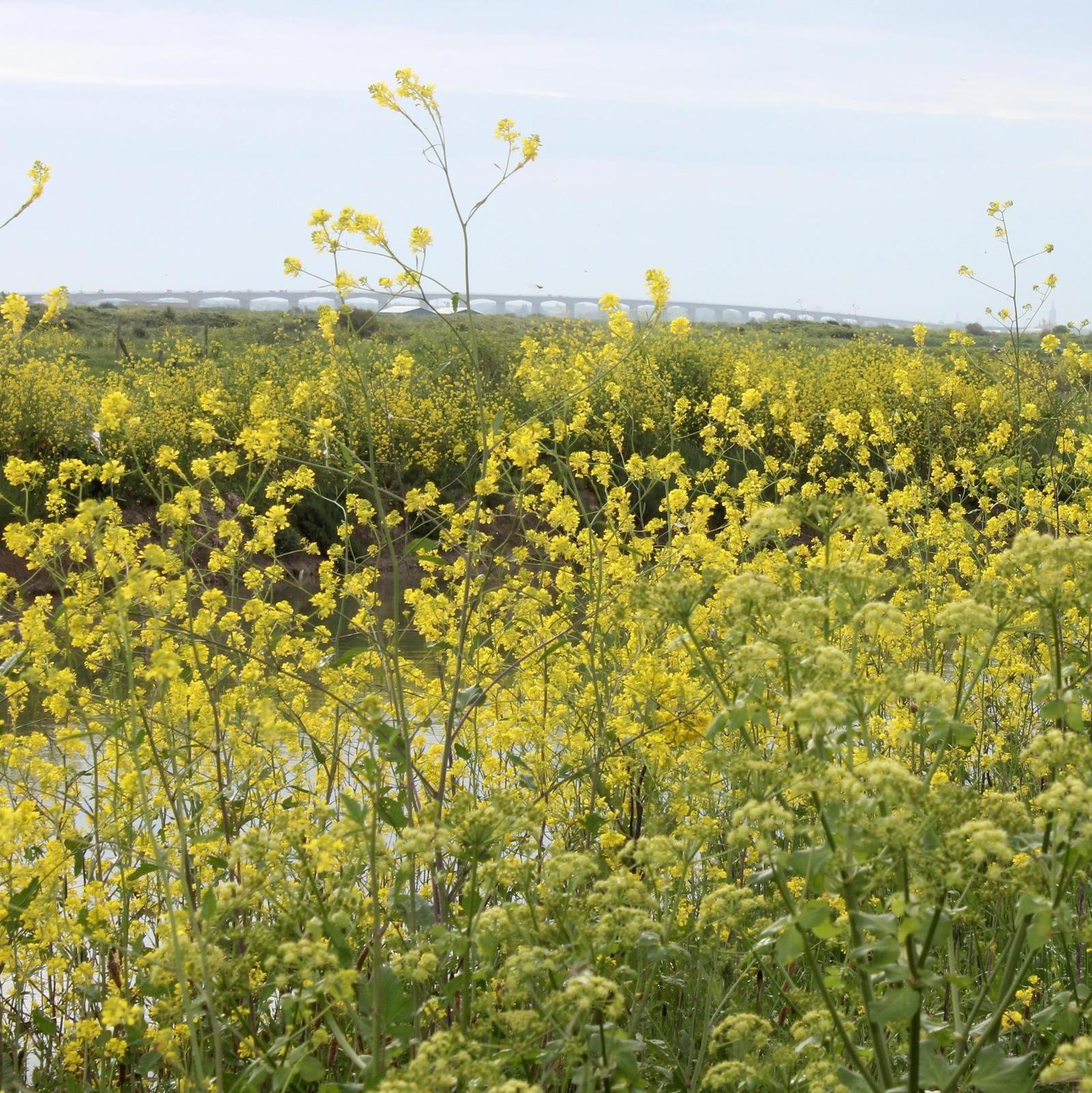 Les marais et au loin le viaduc